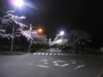 Sakura_2011_07