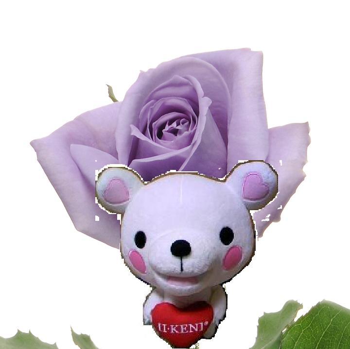 Rose_kumaken