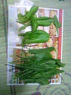 二度目の収穫(^O^)